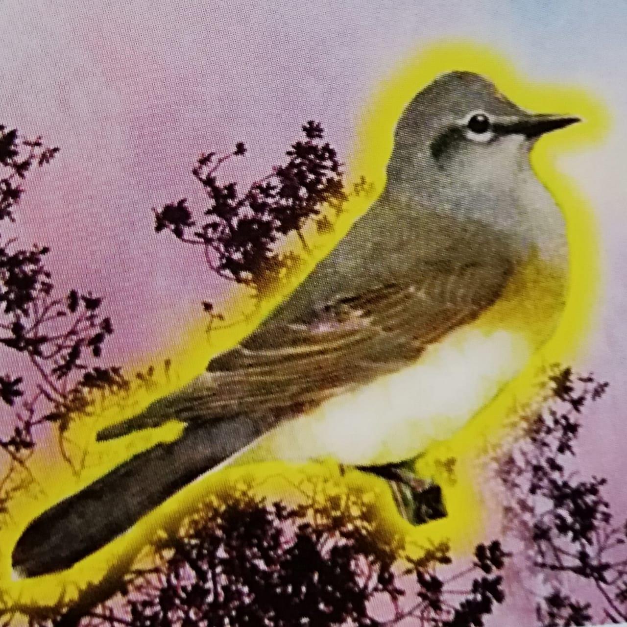 Libro Dios Pájaro Chiochinteo